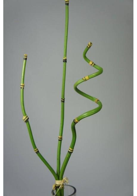 Vara de bambu flexible de 76cm largo